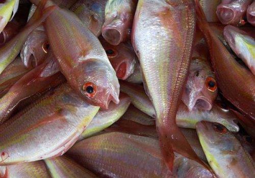 Il pesce di…